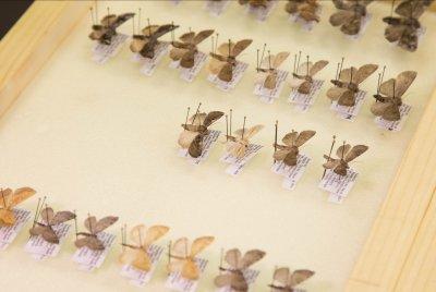 О передаче коллекции Бабочек