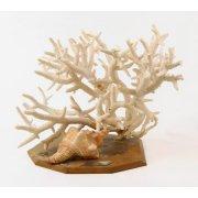 Коралл и морская ракушка