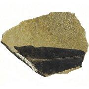 Отпечаток листа цикадофита