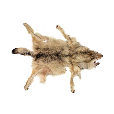 Шкура волка