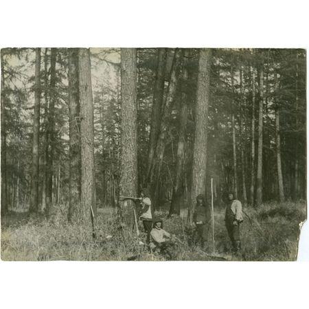 Фотография. Выбор древесины
