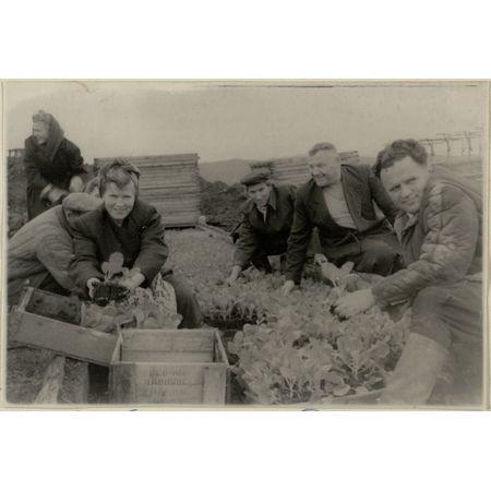 Фотография. Работники совхоза