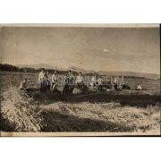 Фотография. Заготовка зеленых трав